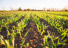 Jak wyselekcjonować odpowiednio działające preparaty rolnicze