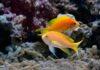 Niezbędne akcesoria do akwarium: napowietrzacz i filtr
